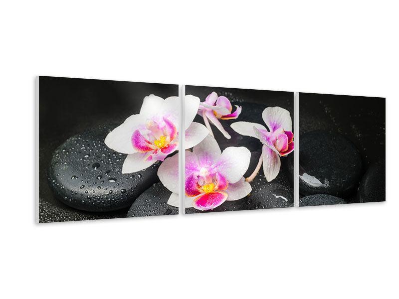 Panorama Hartschaumbild 3-teilig Feng-Shui-Orchidee Zen