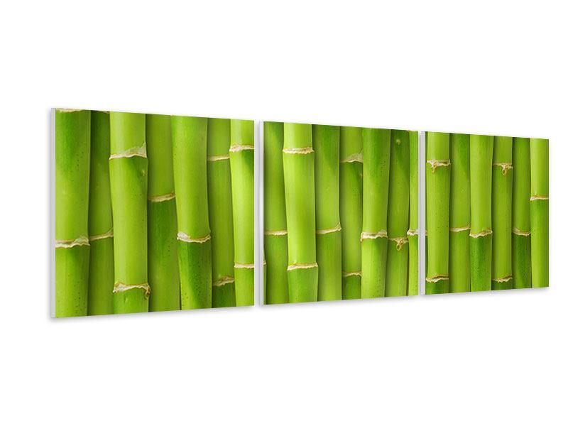 Panorama Hartschaumbild 3-teilig Bambuswand