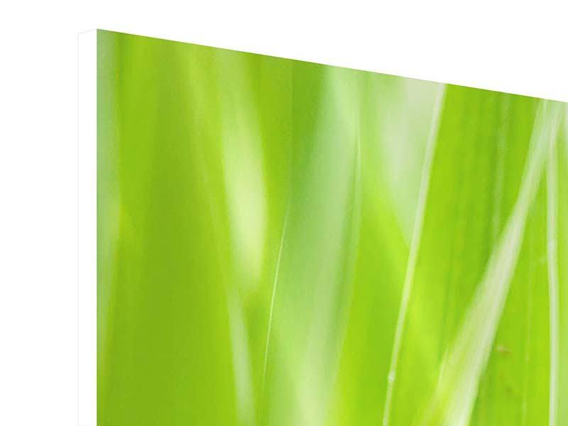 Hartschaumbild 3-teilig modern Gras XXL
