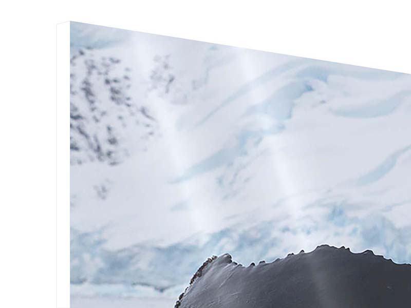 Hartschaumbild 3-teilig modern Der Buckelwal