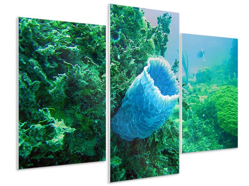 Hartschaumbild 3-teilig modern Korallen