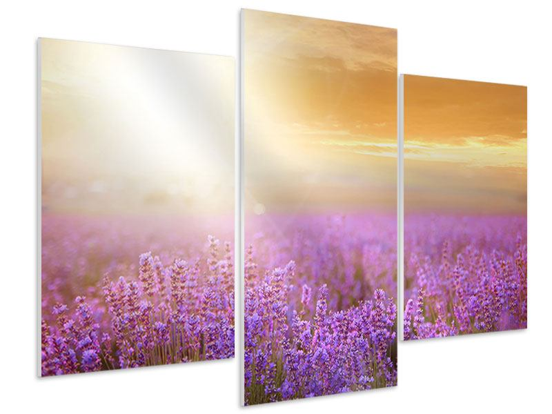 Hartschaumbild 3-teilig modern Sonnenuntergang beim Lavendelfeld