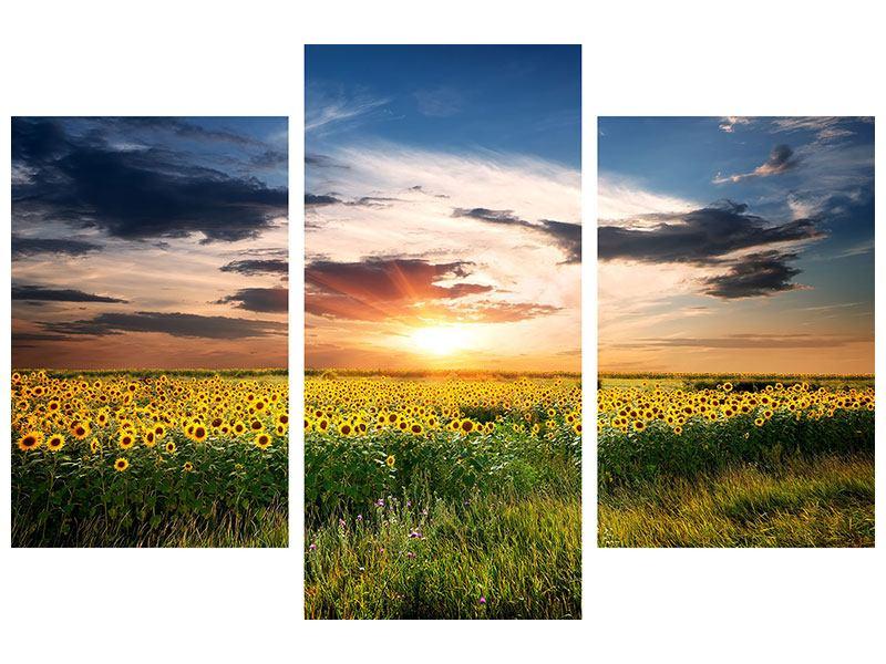Hartschaumbild 3-teilig modern Ein Feld von Sonnenblumen