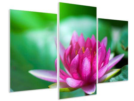 Hartschaumbild 3-teilig modern Lotus in Pink