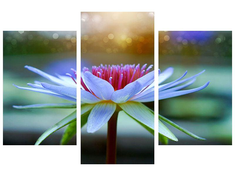 Hartschaumbild 3-teilig modern Pretty Lotus