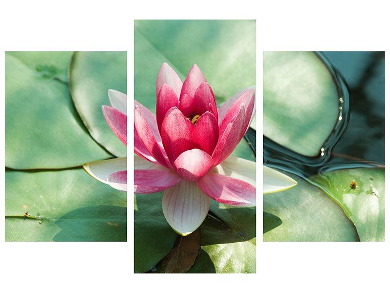 Hartschaumbild 3-teilig modern Der Frosch und das Lotusblatt