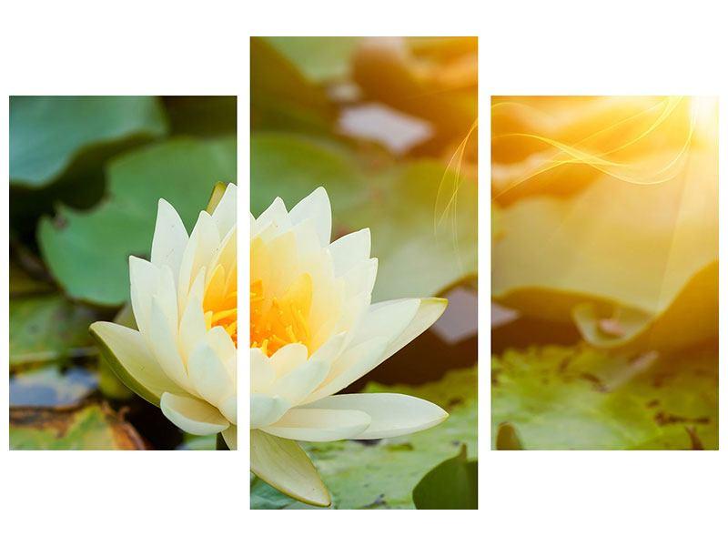 Hartschaumbild 3-teilig modern Romantische Seerose