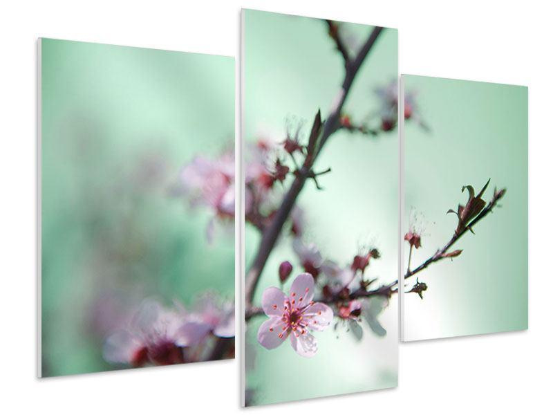 Hartschaumbild 3-teilig modern Die japanische Kirschblüte