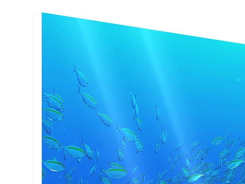 Hartschaumbild 3-teilig modern Fischschwärme