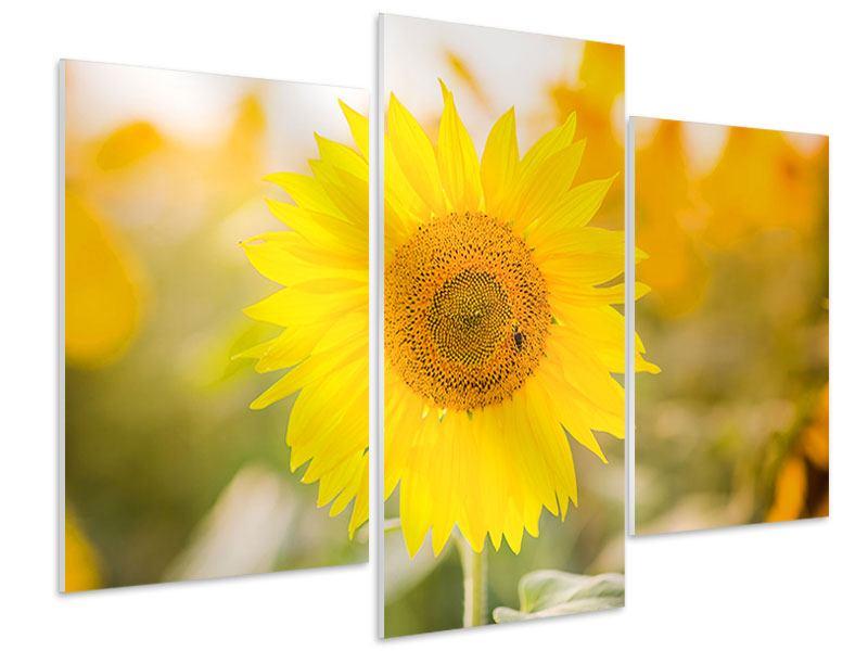 Hartschaumbild 3-teilig modern Sunflower