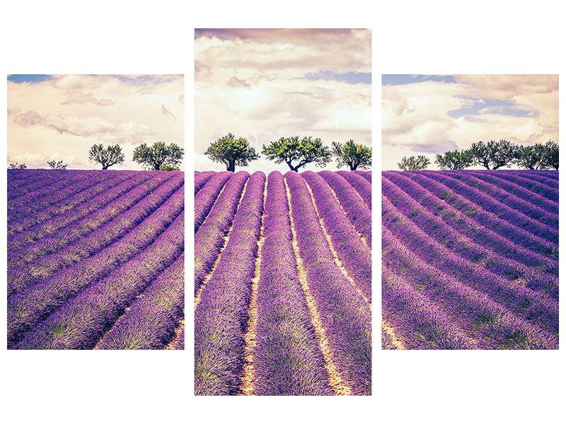 Hartschaumbild 3-teilig modern Das Lavendelfeld