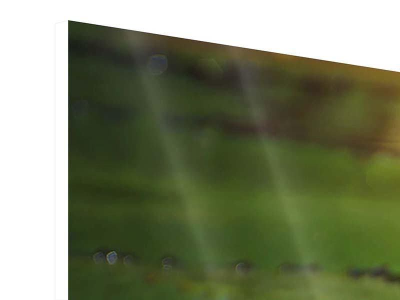 Hartschaumbild 3-teilig modern Lilienspiegelung