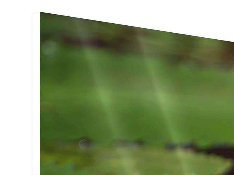 Hartschaumbild 3-teilig modern Lotus im Wasser