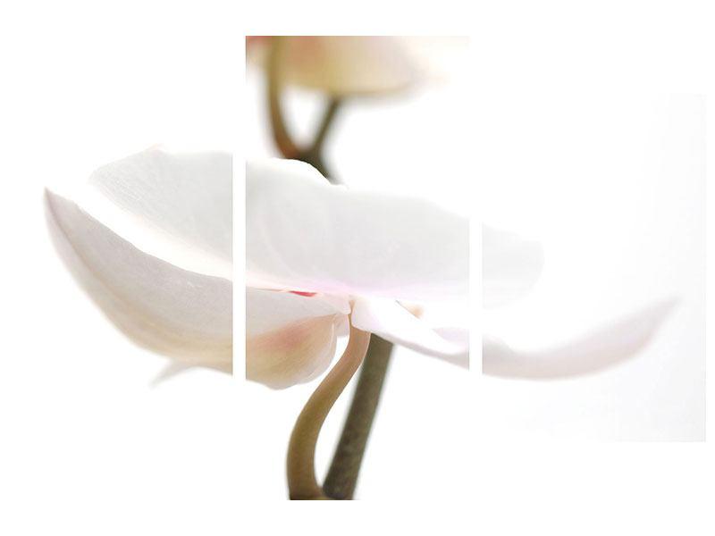 Hartschaumbild 3-teilig modern XXL Orchideenblüte