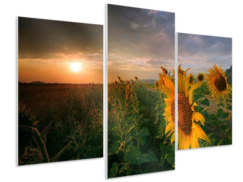 Hartschaumbild 3-teilig modern Sonnenblumen im Lichtspiel