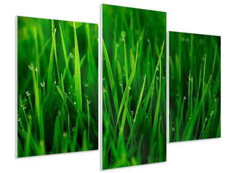 Hartschaumbild 3-teilig modern Gras mit Morgentau