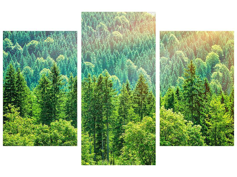 Hartschaumbild 3-teilig modern Der Waldhügel