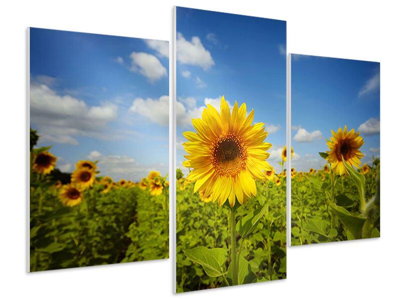 Hartschaumbild 3-teilig modern Sommer-Sonnenblumen