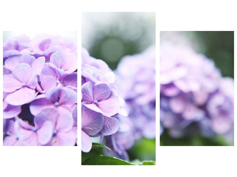 Hartschaumbild 3-teilig modern Hortensien