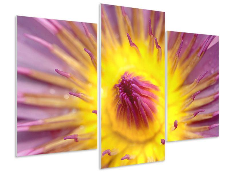 Hartschaumbild 3-teilig modern XXL-Lotus