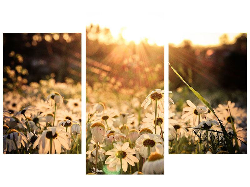Hartschaumbild 3-teilig modern Gänseblümchen bei Sonnenuntergang