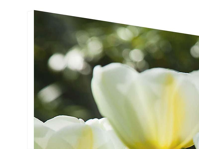 Hartschaumbild 3-teilig modern Tulpen bei Sonnenuntergang