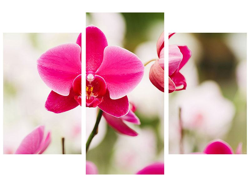 Hartschaumbild 3-teilig modern Perspektivische Orchideen