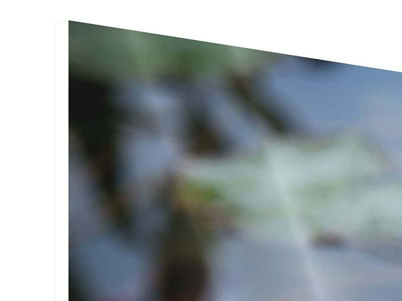 Hartschaumbild 3-teilig modern Das Seerosenduo