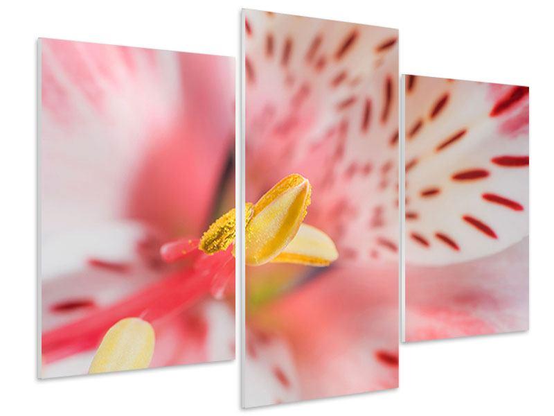 Hartschaumbild 3-teilig modern Der Lilienstempel