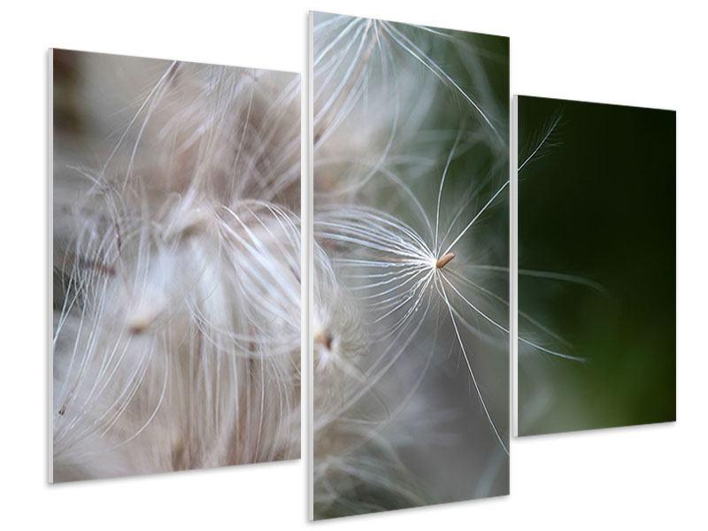 Hartschaumbild 3-teilig modern Close up Blütenfasern