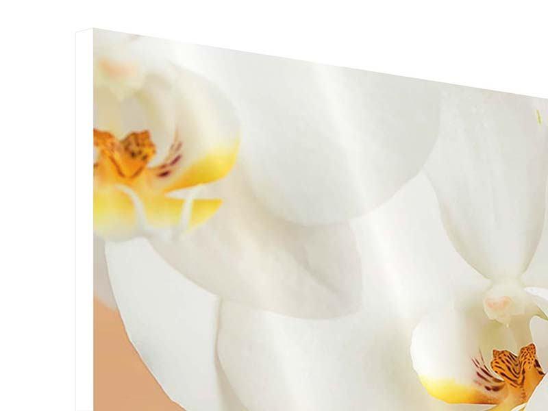 Hartschaumbild 3-teilig modern Weisse Orchideenblüten
