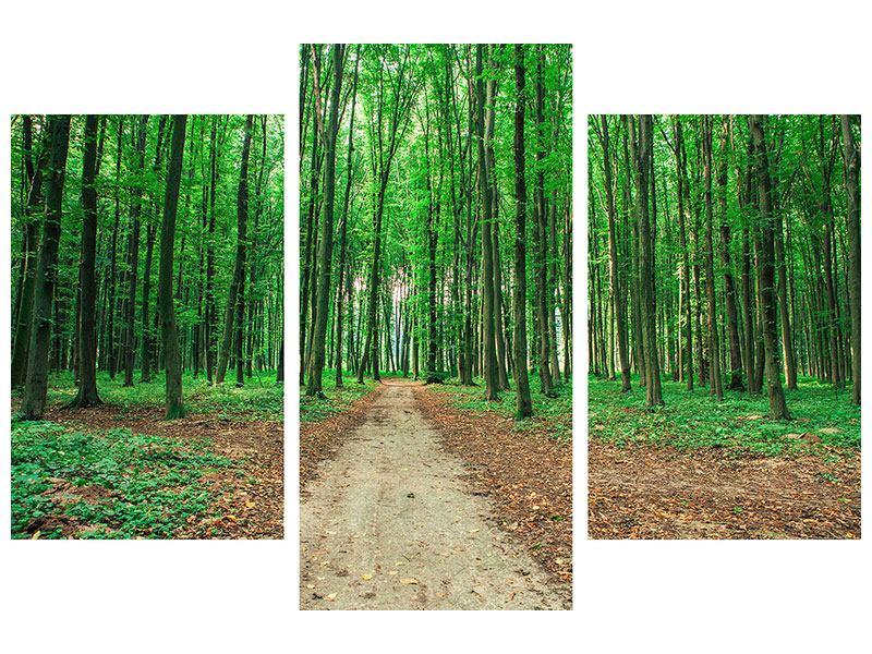 Hartschaumbild 3-teilig modern Tannenwald