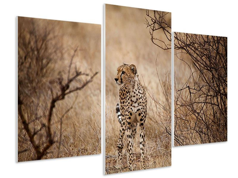 Hartschaumbild 3-teilig modern Eleganter Gepard