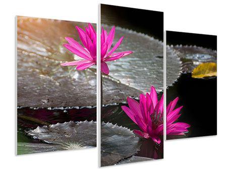 Hartschaumbild 3-teilig modern Seerosen im Morgentau