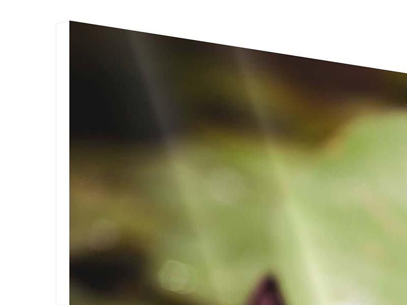 Hartschaumbild 3-teilig modern Seerosen bei Sonnenaufgang