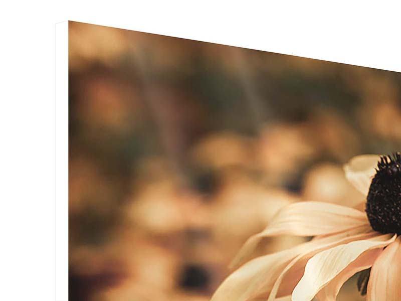 Hartschaumbild 3-teilig modern Margeriten in Sepia
