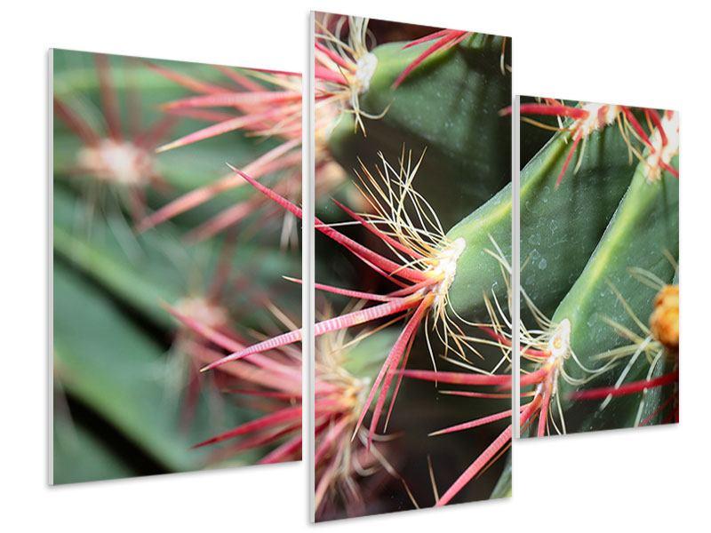 Hartschaumbild 3-teilig modern Die Kaktusblüte