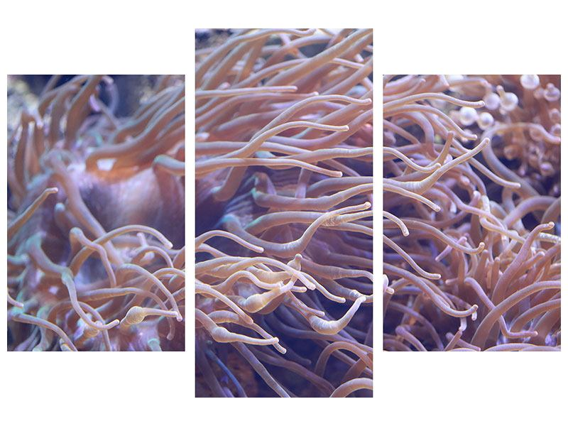 Hartschaumbild 3-teilig modern Korallenriff