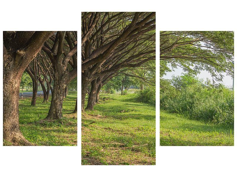 Hartschaumbild 3-teilig modern Alter Baumbestand