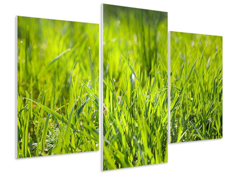 Hartschaumbild 3-teilig modern Gras im Morgentau