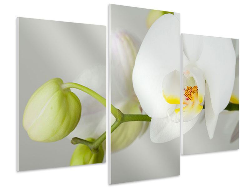 Hartschaumbild 3-teilig modern Riesenorchidee