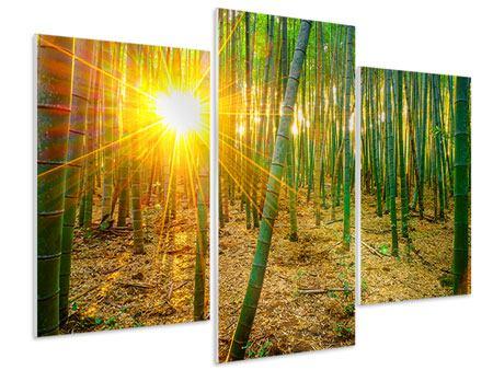 Hartschaumbild 3-teilig modern Bambusse