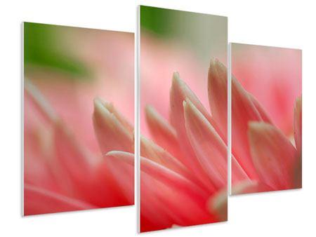 Hartschaumbild 3-teilig modern Close Up einer Blüte