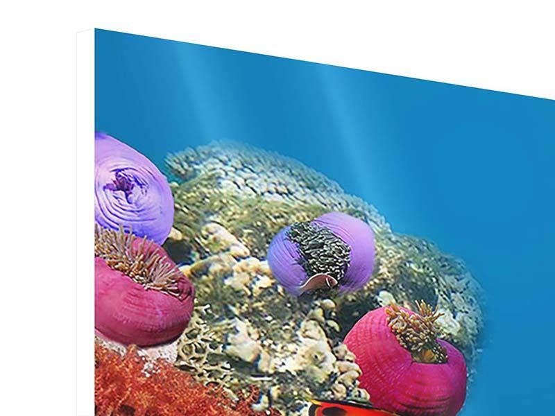 Hartschaumbild 3-teilig modern Fisch im Wasser
