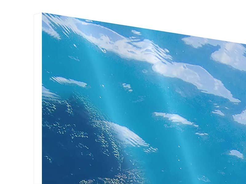 Hartschaumbild 3-teilig modern Die Wasserschildkröte