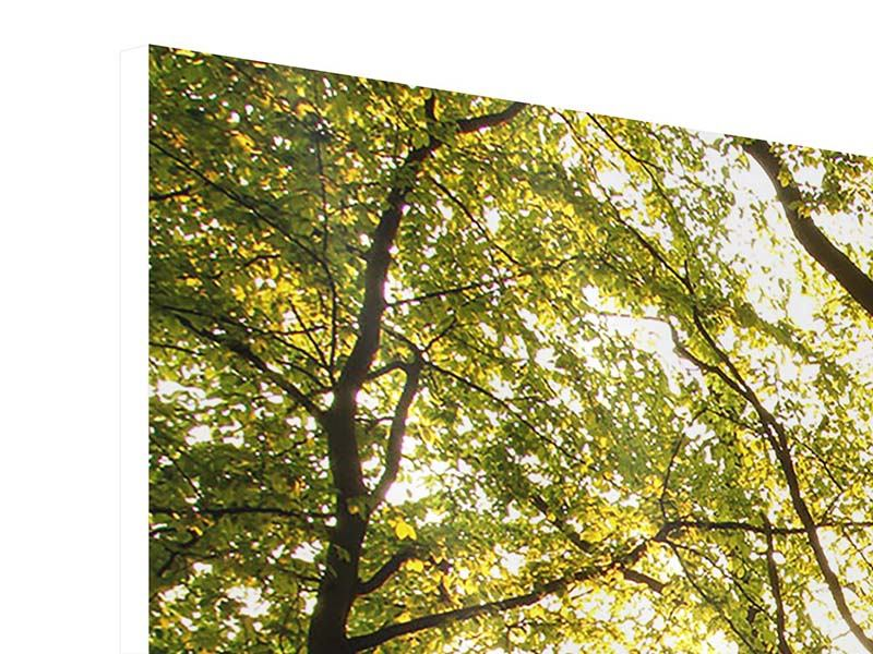 Hartschaumbild 3-teilig modern Sonnenuntergang zwischen den Bäumen
