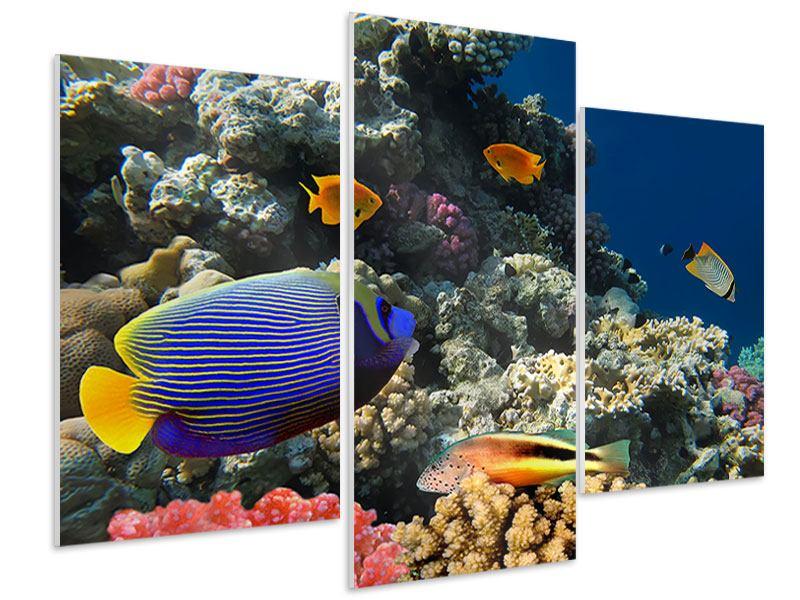 Hartschaumbild 3-teilig modern Das Aquarium