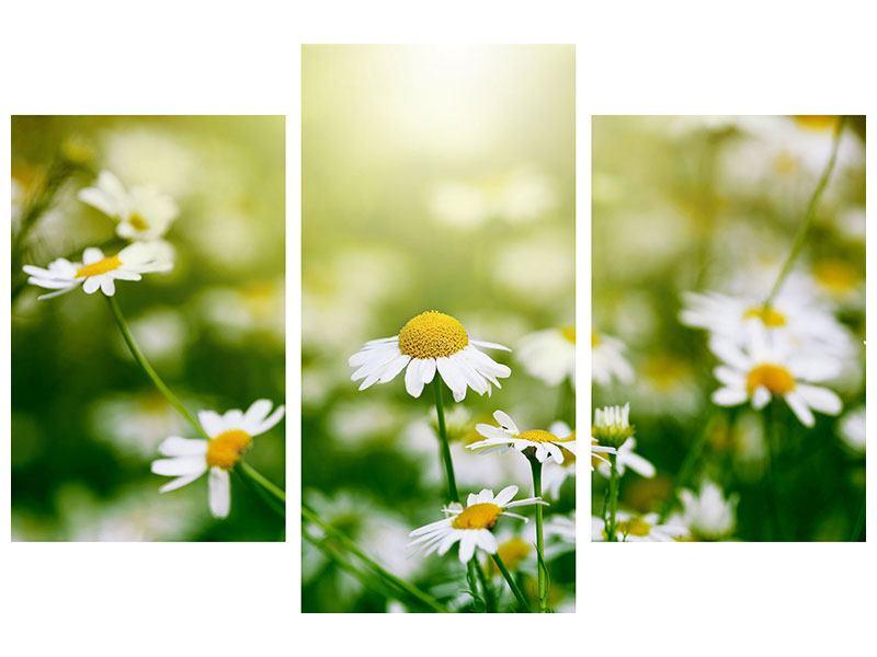 Hartschaumbild 3-teilig modern Die Gänseblümchen