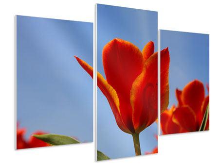Hartschaumbild 3-teilig modern Rote Tulpen in XXL
