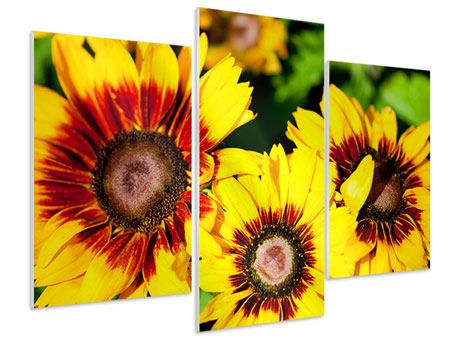 Hartschaumbild 3-teilig modern Reife Sonnenblumen